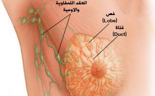 Photo of تقرح الحلمة أثناء الرضاعة: أسباب وعلاجات طبيعية