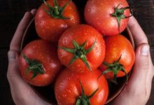 Photo of هذا ما يحدث لجسمك نتيجة تناول الطماطم يوميًا