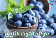 Photo of فوائد التوت الأزرق