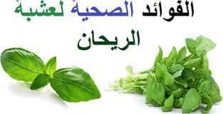 صورة عشبة الريحان: فوائد صحية ونصائح هامة